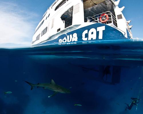 Aqua Cat Cruises Bahamas